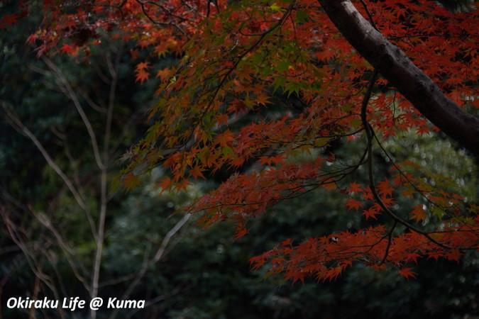 Kouyou2015_03