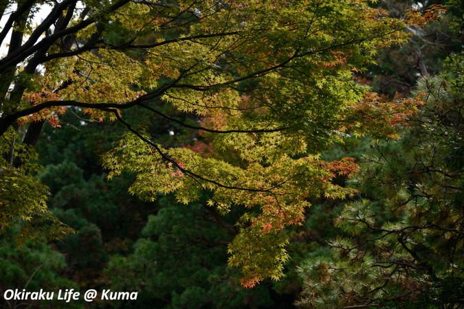 Kouyou2015_04