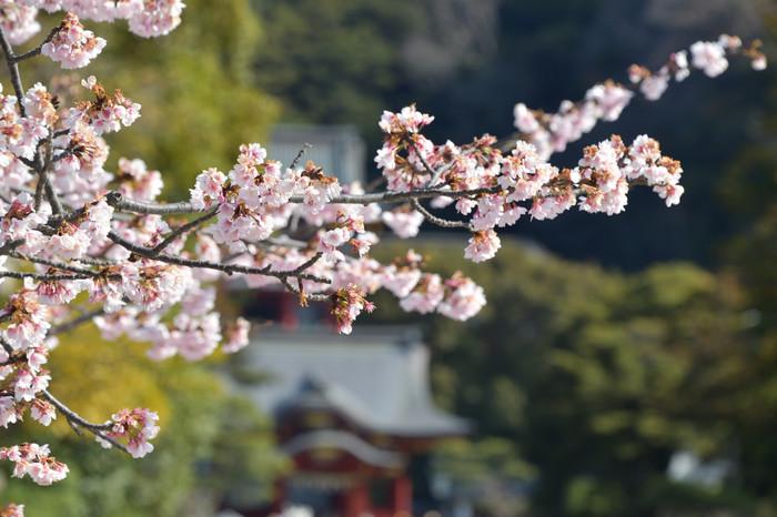 Kamakura_010